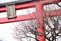 亀戸天神社で満開の梅を鑑賞!2019 - kenのデジカメライフ