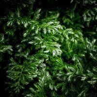 ・green & white mixed foliage・ - - Foliage & Blooms'葉と花' pics. -