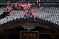 古寺を訪ねて - 花々の記憶  happy momo