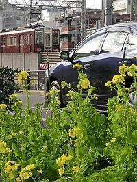 小さな春を探す、道端に咲き始めた可愛い菜の花に逢いました、菜の花は春の訪れを告げていました。阪急電車と菜の花 - 藤田八束の日記