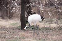 井の頭自然文化園2019年2月27日 - お散歩ふぉと2