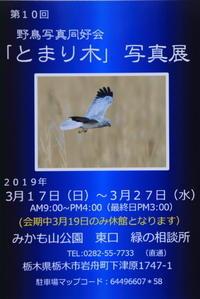 第10回野鳥写真展のご案内! - パシャパシャパシャ