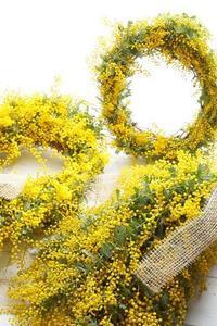ミモザ3姉妹 - お花に囲まれて