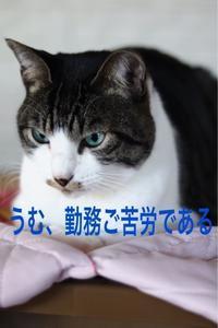 にゃんこ劇場「いってらっしゃいニャン」 - ゆきなそう  猫とガーデニングの日記
