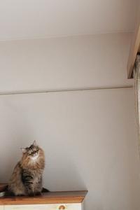 これ見よがしに飛ぶ猫 - きょうだい猫と仲良し暮らし