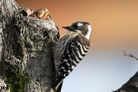春の囀りに・・・ - 鳥と共に日々是好日