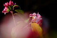 美香の花 - きずなの家創り