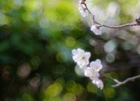 梅の季節 - feel a season