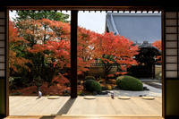 京の紅葉2018妙顕寺のお庭にて - 花景色-K.W.C. PhotoBlog