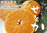 究極の柑橘『せとか』超!ハイペースで出荷中!ご家庭用にもご贈答用にも大人気商品です! - FLCパートナーズストア