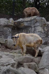 ヒナタとロウ - 動物園へ行こう