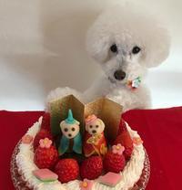 ひな祭りに・・マジパンわんこtoいちごのタルト♡ - パンのちケーキ時々わんこ
