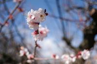 駿河の春 - :Daily CommA: