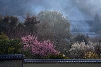 梅の咲く奈良公園奈良公園 - 峰さんの山あるき
