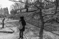 梅の代わりに汽車を見る - え~えふ写真館