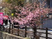 松戸から江戸川・利根運河へ - pottering