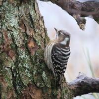雨の庭 - TACOSの野鳥日記