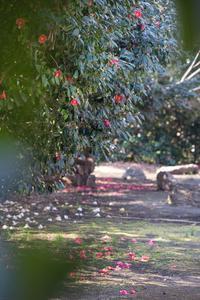 椿の風景 - 柳に雪折れなし!Ⅱ