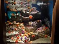 葛西臨海水族園:南アフリカ沿岸、バハカリフォルニア~アネモネと言えば花ではなく・・・ - 続々・動物園ありマス。