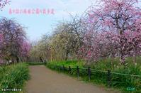 2019年 春の訪れに心ウキウキ(和泉リサイクル環境公園) - 日本全国くるま旅