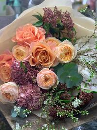育ちすぎ?環境に合う観葉植物 - ルーシュの花仕事