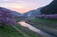 伊豆 第21回みなみの桜と菜の花まつり 3 河津桜 日の出 - photograph3