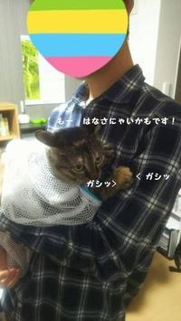 ガシッ! - 八幡地域猫を考える会
