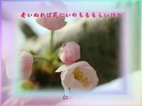 フォト575『老いぬれば花にいのちももらいけり』zqx0305 - 老仁のハッピーライフ