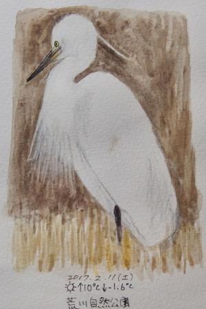 #野鳥スケッチ #ネイチャー・ジャーナル『小鷺』 Little egret - スケッチ感察ノート (Nature journal)