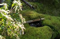 「詫び寂びの庭-八幡市松花堂庭園ー 」 - ほぼ京都人の密やかな眺め