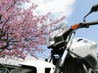 3/2(日)、NC700Sで早咲き桜と梅の花を見に - 某の雑記帳