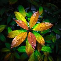 ・光沢がある葉 ・ - - Foliage & Blooms'葉と花' pics. -