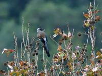台湾野鳥撮影その28 - 季節の映ろひ