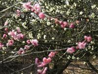 柔らかに、春の色。 - タビノイロドリ