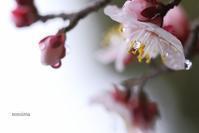 3月の雨 - マイ・ライフ