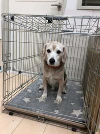 ペットの防災~僕たちを守って - ビーグル犬フロドのひとりごと