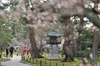 ままに/3月の散策金沢兼六園 - Maruの/ まゝに