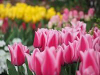 京都府立植物園の早春の草花展♪ - アリスのトリップ