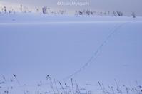 なごり惜しい雪景色 - ekkoの --- four seasons --- 北海道
