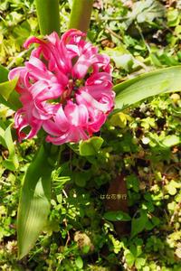 春の植物記録 - はな花季行/おっ!オッ?