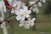3月だから冬から春へ - White Love