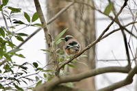 森のカケス - 四季の予感
