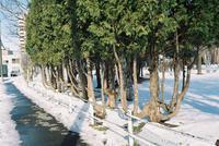 冬の撮影で故障したミノルタハイマチック7sII - 照片画廊