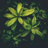 ・さび色の葉っぱ・ - - Foliage & Blooms'葉と花' pics. -