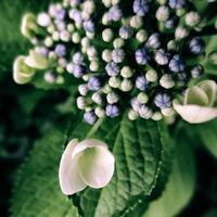 ・かわいい白い花・ - - Foliage & Blooms'葉と花' pics. -