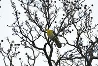 台湾野鳥撮影その29 - 季節の映ろひ