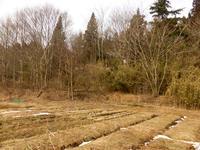 雪解け、5年目の自然農 - 孤独と私