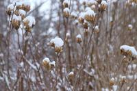雪の花 - ∞ infinity ∞