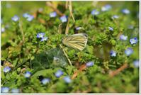 蝶たちも飛び出しました! - ハチミツの海を渡る風の音