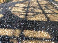 梅の季節も終わろうとしてます。いよいよ、桜が始まる。 - 設計事務所 arkilab